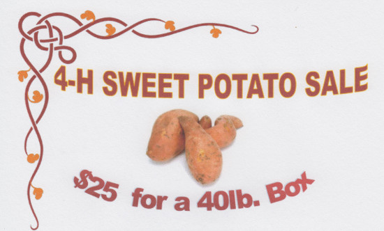 RRPJ-4-H Sweet Potatoes-17Sep15